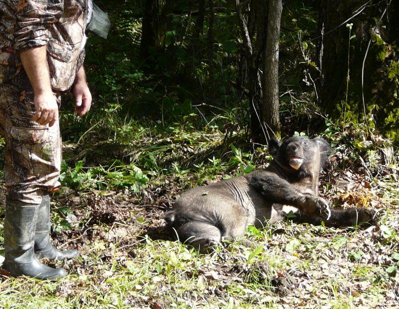 набирается потом пьяная медведица в хабаровске видео шерстяные